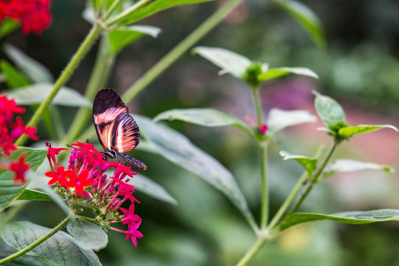 jardin-aux-papillons-morbihan-bretagne-sud-23 © © Magalie BARRE