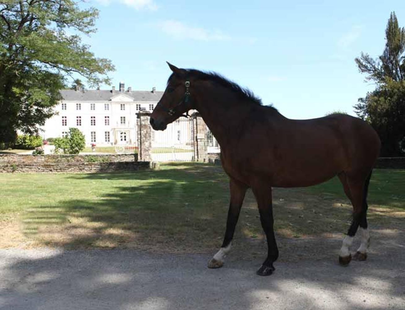 Centre-Equestre-Les-Ecuries-de-la-Chênaie-St-Avé-Golfe-du-Morbihan-Bretagne sud © Centre Equestre Les Ecuries de la Chênaie