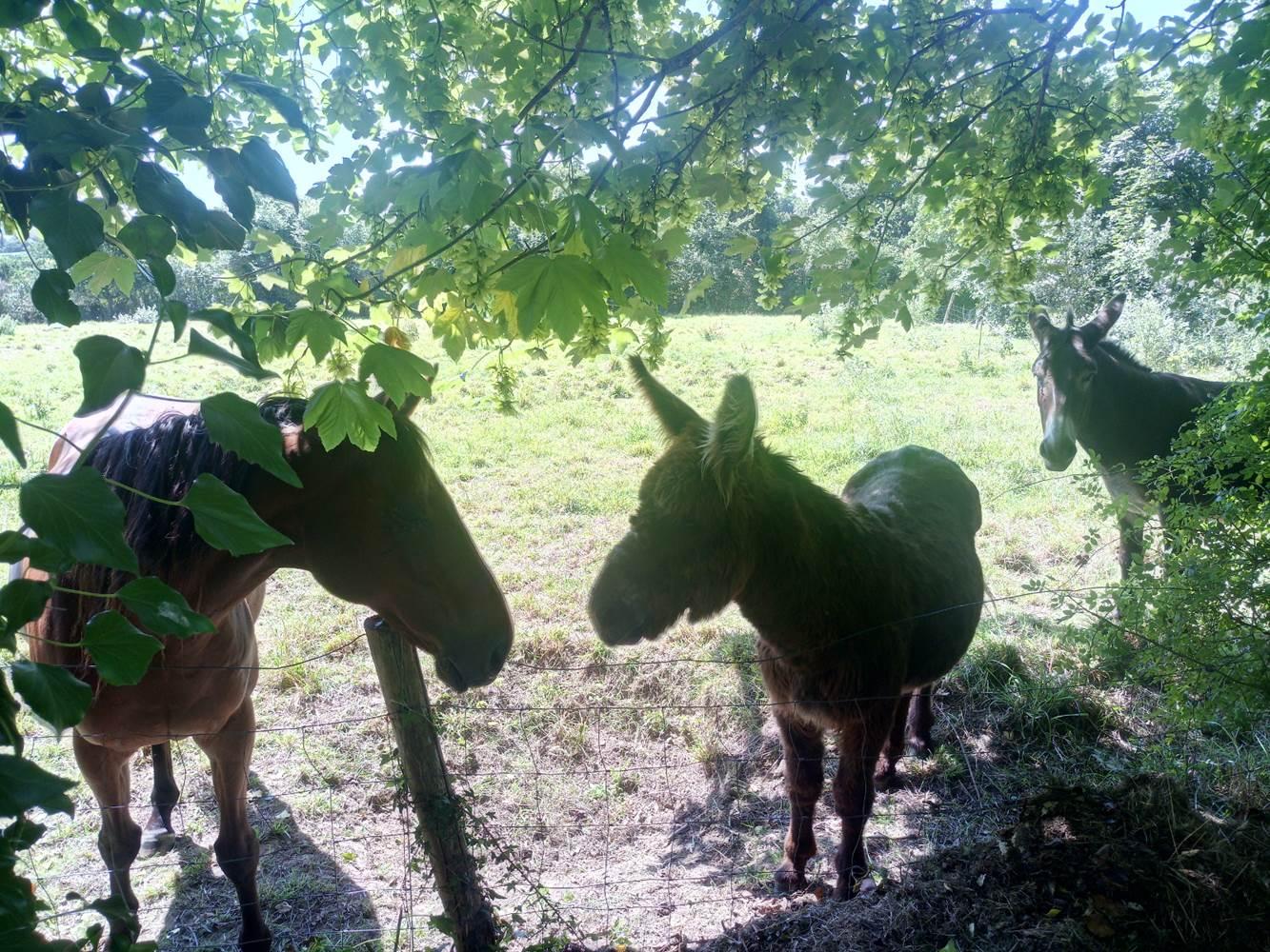 camping-nature-accueil-equestre ©