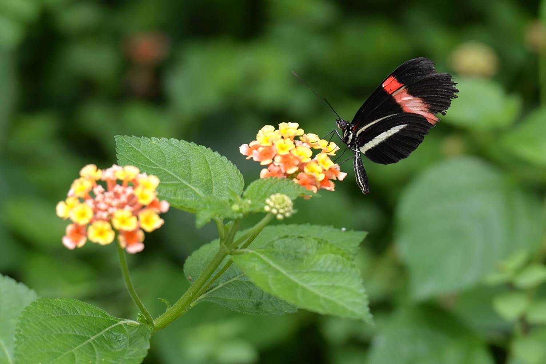 jardin-aux-papillons-morbihan-bretagne-sud-13 © Michel RENAC