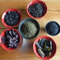Stage Cuisine végétalienne des algues et plantes sauvages