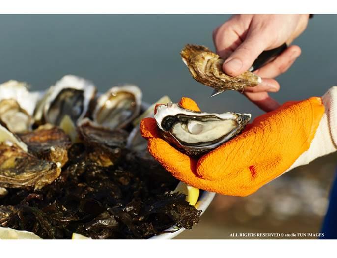 Les-Viviers-de-Banastère-Le-Tour-du-Parc-Presqu'île-de-Rhuys-Golfe-du-Morbihan-Bretagne sud © Les Viviers de Banastère