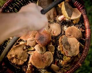 A la découverte des champignons Saint Dolay Morbihan Bretagne Sud ©