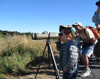 Sorties-ornithonogiques-sarzeau-morbihan-bretagne sud © BIT Sarzeau
