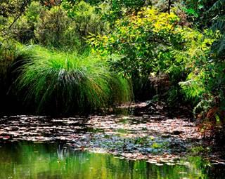 Marais du Roho  © G. Huet Photgraphies