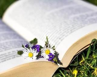Balade lecture à Limerzel ©