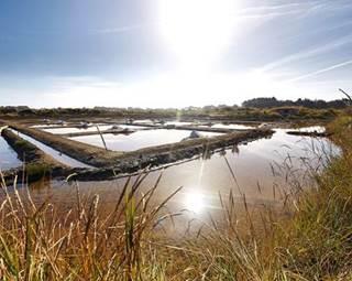 Visite-Paludière-Saline-Saint-Armel-Morbihan-Bretagne Sud © OT Presqu'ile de Rhuys