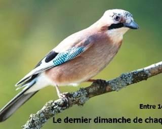 Les Randoiseaux de St-Dégan ©