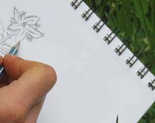Balade croque plante-Le Guerno-DLRBT ©