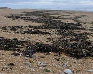 Découverte de l'estran et des algues-St Pierre Quiberon-Morbihan-Bretagne Sud © Grand Site de France Dunes Sauvages de Gâvres à Quiberon