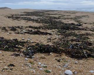 Découverte des algues-Quiberon-Morbihan-Bretagne Sud © Découverte des algues-Quiberon-Morbihan-Bretagne Sud