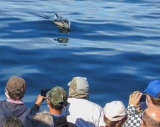 faune-ocean-locmariaquer ©