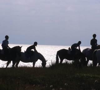 Equitation : La Ferme du Poney Bleu