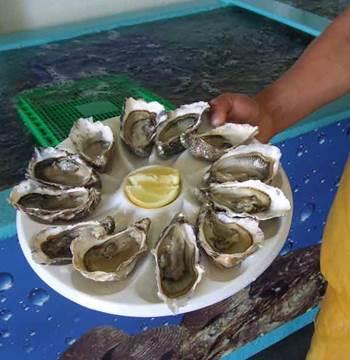 Ostréiculture Martin-Ile aux Moines-Golfe-du-Morbihan-Bretagne sud