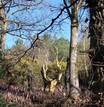 L'arbre d'or - Le Val sans retour - Tréhorenteuc - Morbihan Bretagne Sud