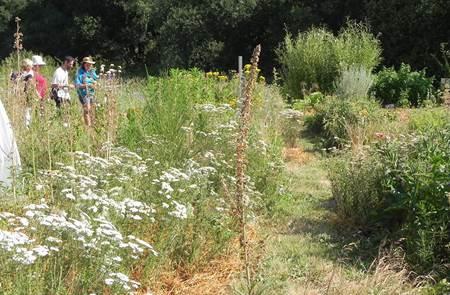 L'Instant Plantes