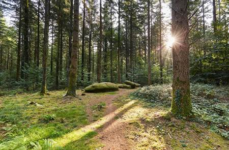Visite guidée en forêt de Camors