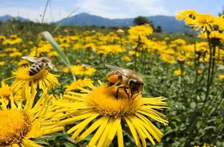 Les abeilles à l'honneur à St Dégan