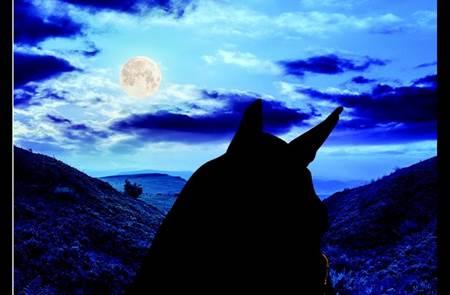 Balade à cheval  sous la lune à Tréhorenteuc