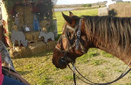 La Féerie de Noël à cheval