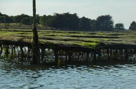 A la découverte des parc à huîtres