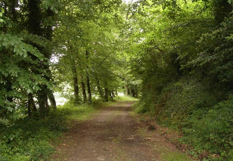 Forêt - Hennebont - Morbihan Bretagne sud © CDT56