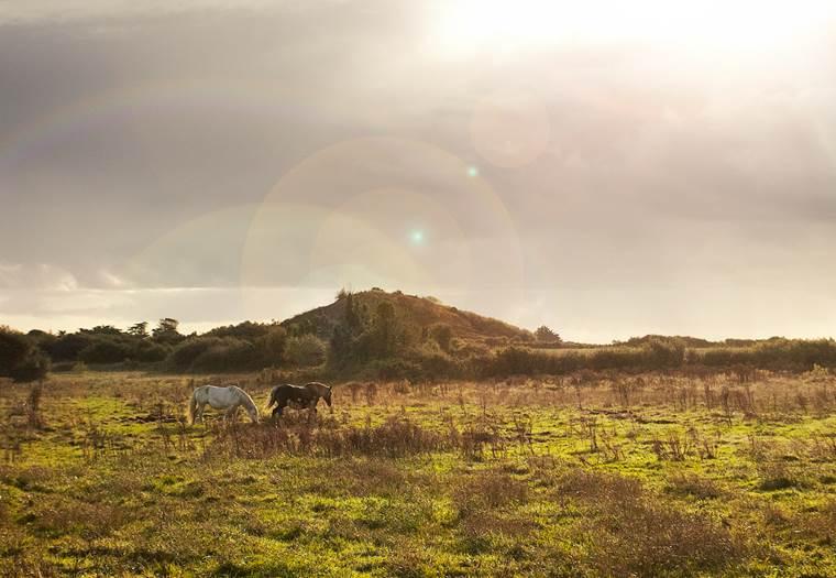 La Butte de César - Arzon - Presqu'île de Rhuys - Golfe du Morbihan ©