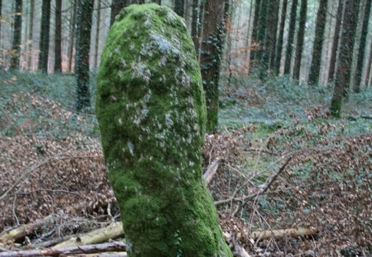 Menhir Men Bihan Camors Morbihan Bretagne-sud © CDT56