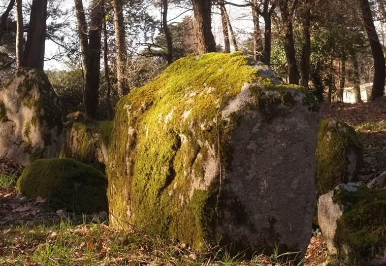 Dolmen du Luffang Crach - Morbihan Bretagne sud (1) © C. WACTAUSEN