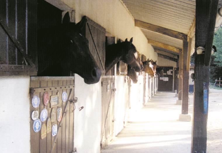 Centre Equestre du Bel Air ©