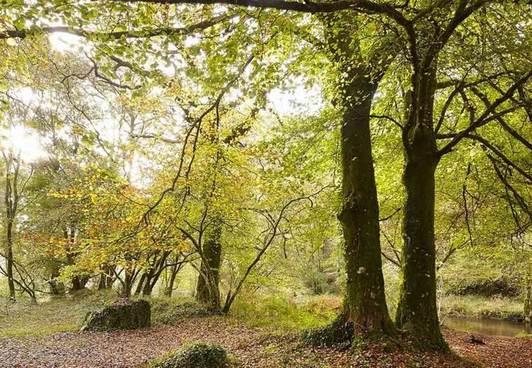 Forêt-Domaniale-Pont-Calleck-Berne-Morbihan-Bretagne-Sud © Alexandre LAMOUREUX