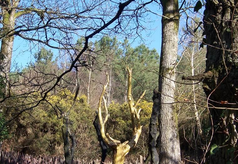 L'arbre d'or - Le Val sans retour - Tréhorenteuc - Morbihan Bretagne Sud © Office de Tourisme du Pays de Mauron