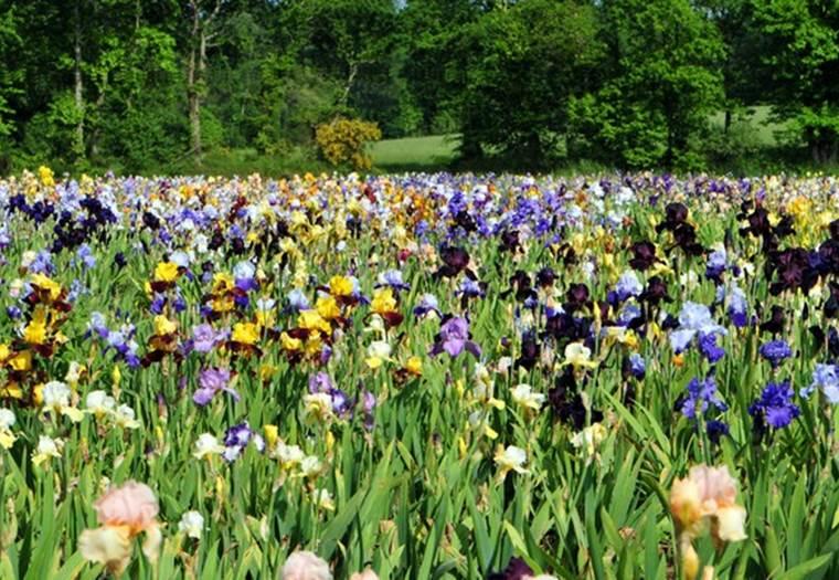 Jardin d'iris Morbihan Bretagne Sud © Jardin d'iris