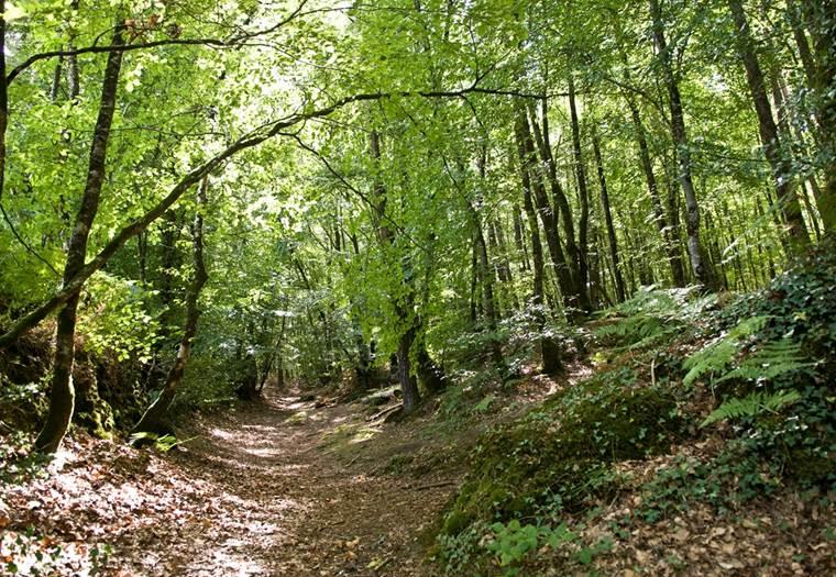 forêt camors morbihan bretagne sud © Ronan Le Guernevel